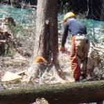 wood-天然乾燥木材ギャラリー01