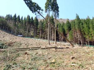 wood-天然乾燥木材ギャラリー02