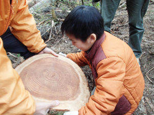 wood-天然乾燥木材ギャラリー04