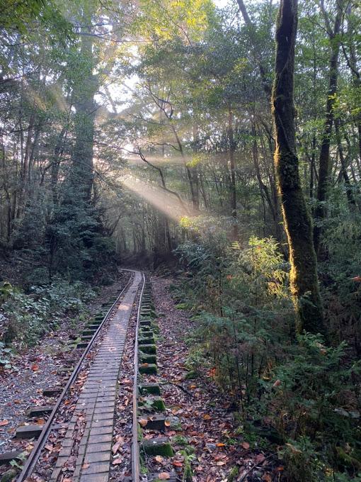 スタッフブログ|自然を満喫する旅|縄文杉|画像09