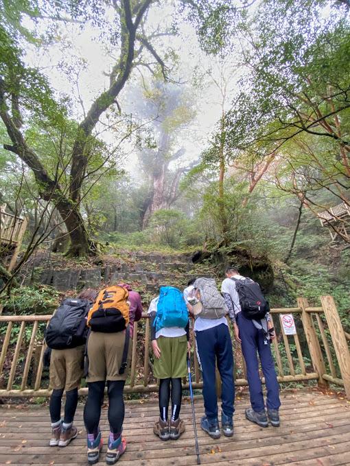 スタッフブログ|自然を満喫する旅|縄文杉|画像17