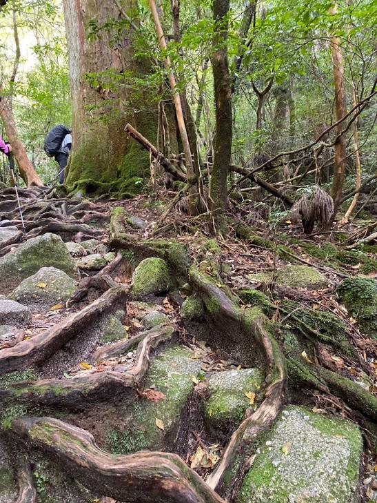 スタッフブログ|自然を満喫する旅|縄文杉|画像02