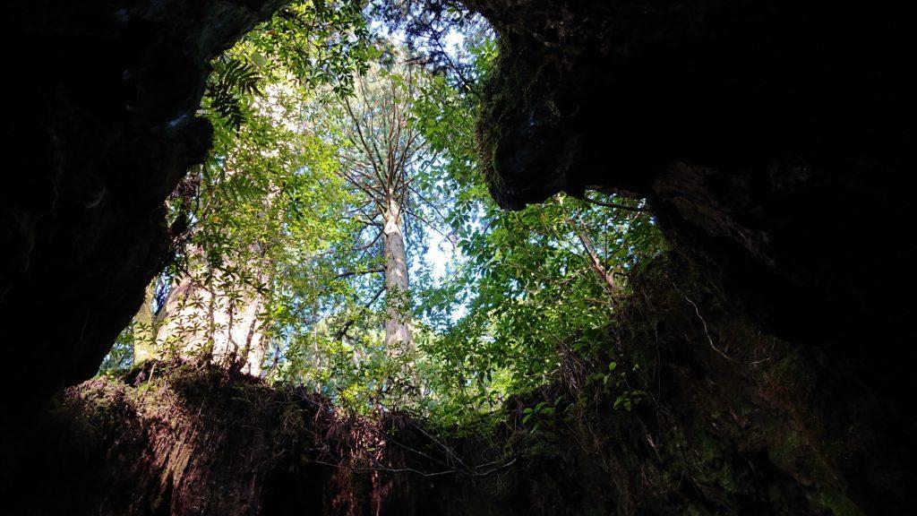 スタッフブログ|自然を満喫する旅|縄文杉|画像11