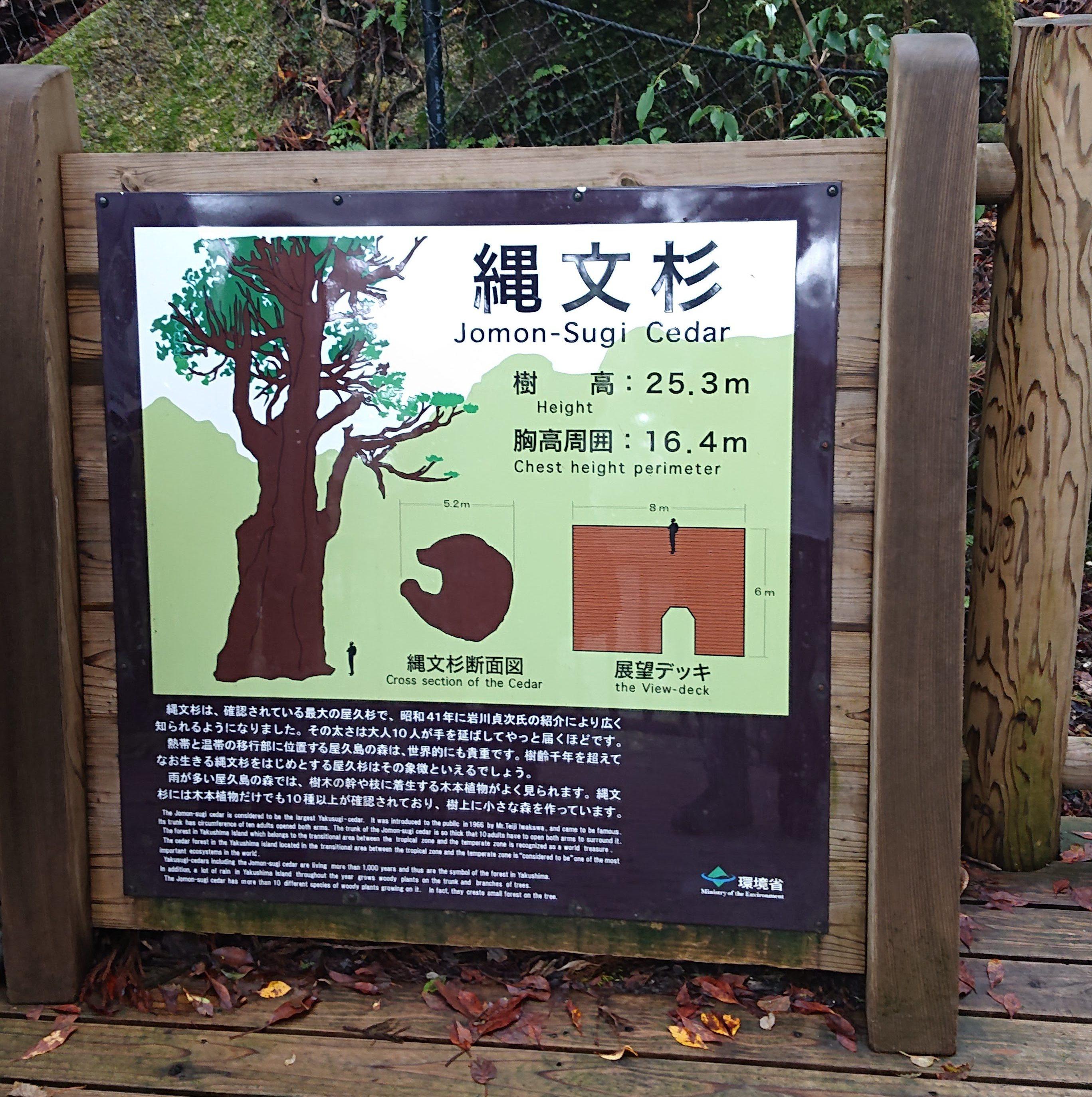 スタッフブログ|自然を満喫する旅|縄文杉|画像16