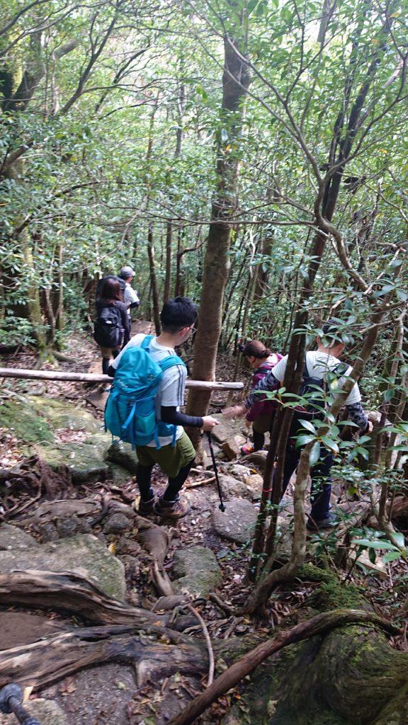 スタッフブログ|自然を満喫する旅|縄文杉|画像18