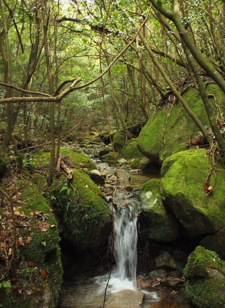 スタッフブログ|自然を満喫する旅|大隅|画像05